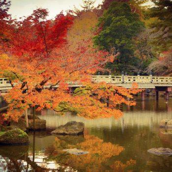 Осень в парке, Япония