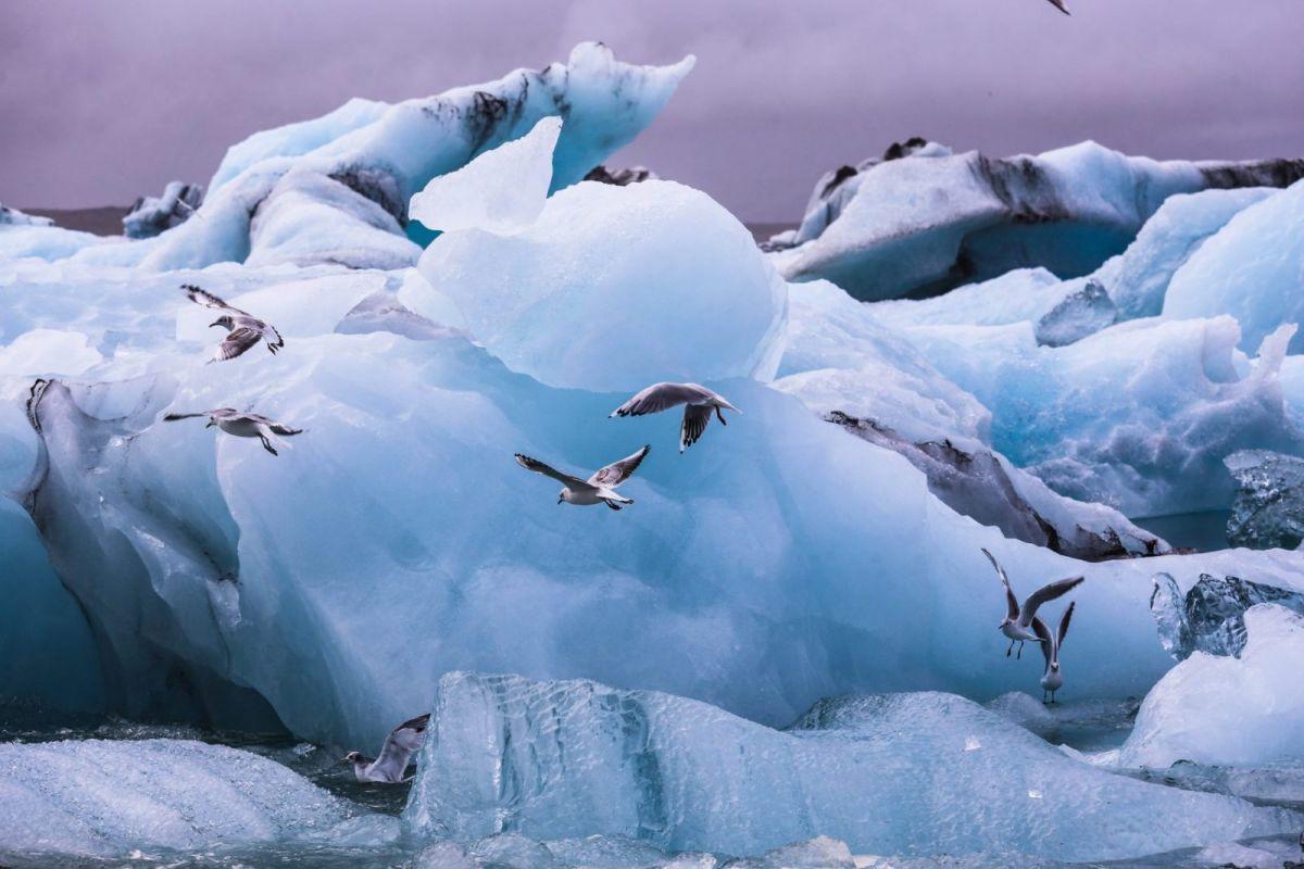 льды в исландии