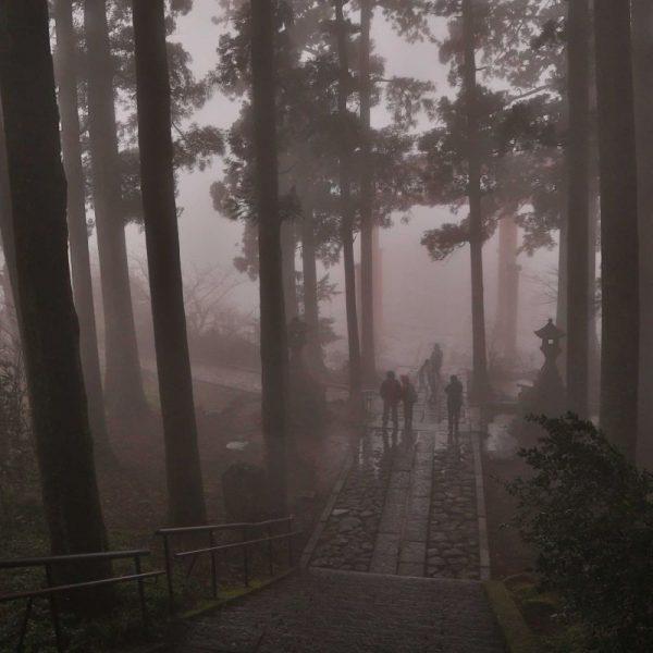 туманная дорожка в японском парке