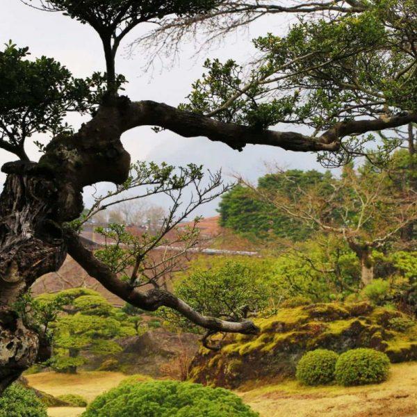 Фото Японского парка