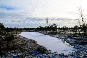 Снег на природе в Латвии