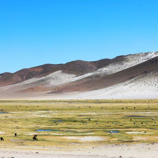 Фауна Боливии