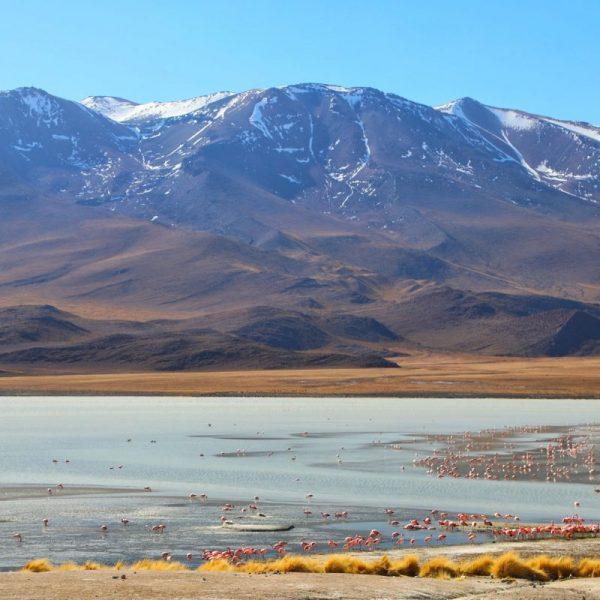 Лагуна Верде и фламинго, Боливия