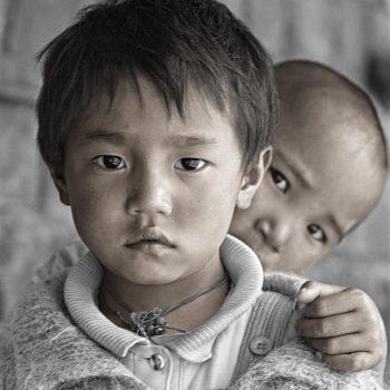 Маленькие Тибетцы