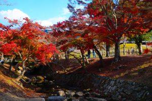 Клены в парке в Японии
