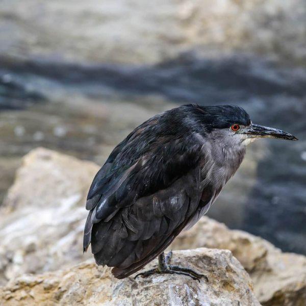 Птица в природе