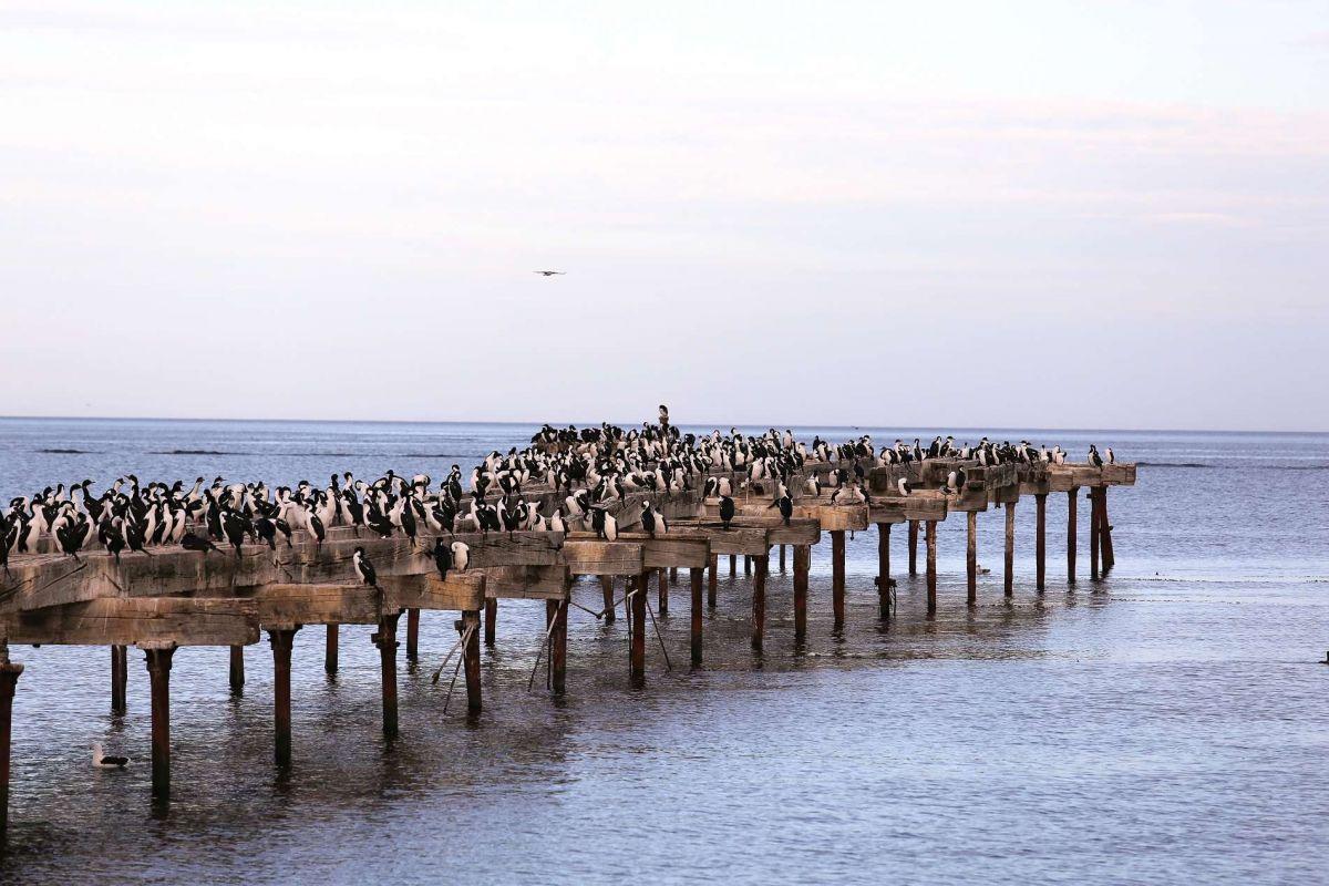 Пунта Аренас, птичий базар