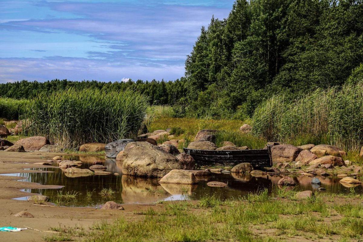 Русский Север, камни и лес