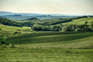 Тоскана поля, вид