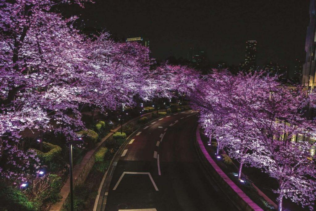 Вечерние сакуры в Японии