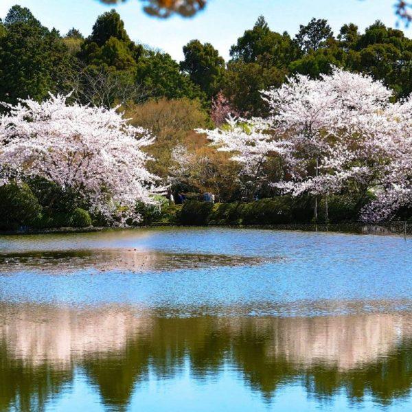 Япония, Киото