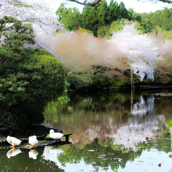 Парк в Киото, Япония