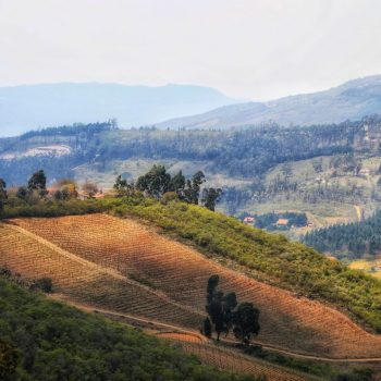 Фермерство в Боливии