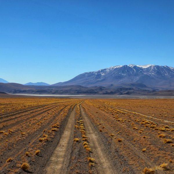 Поле в Боливии