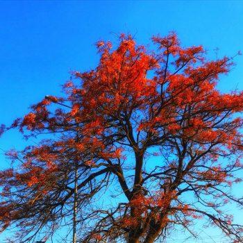 Рыжие листья, Боливия