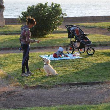 Парк, женщина и щенок