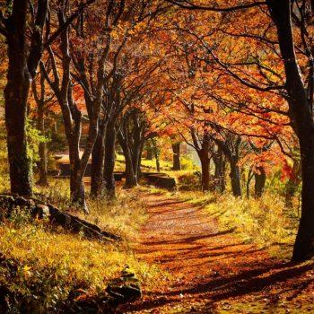 Осенняя дорожка в парке в Японии