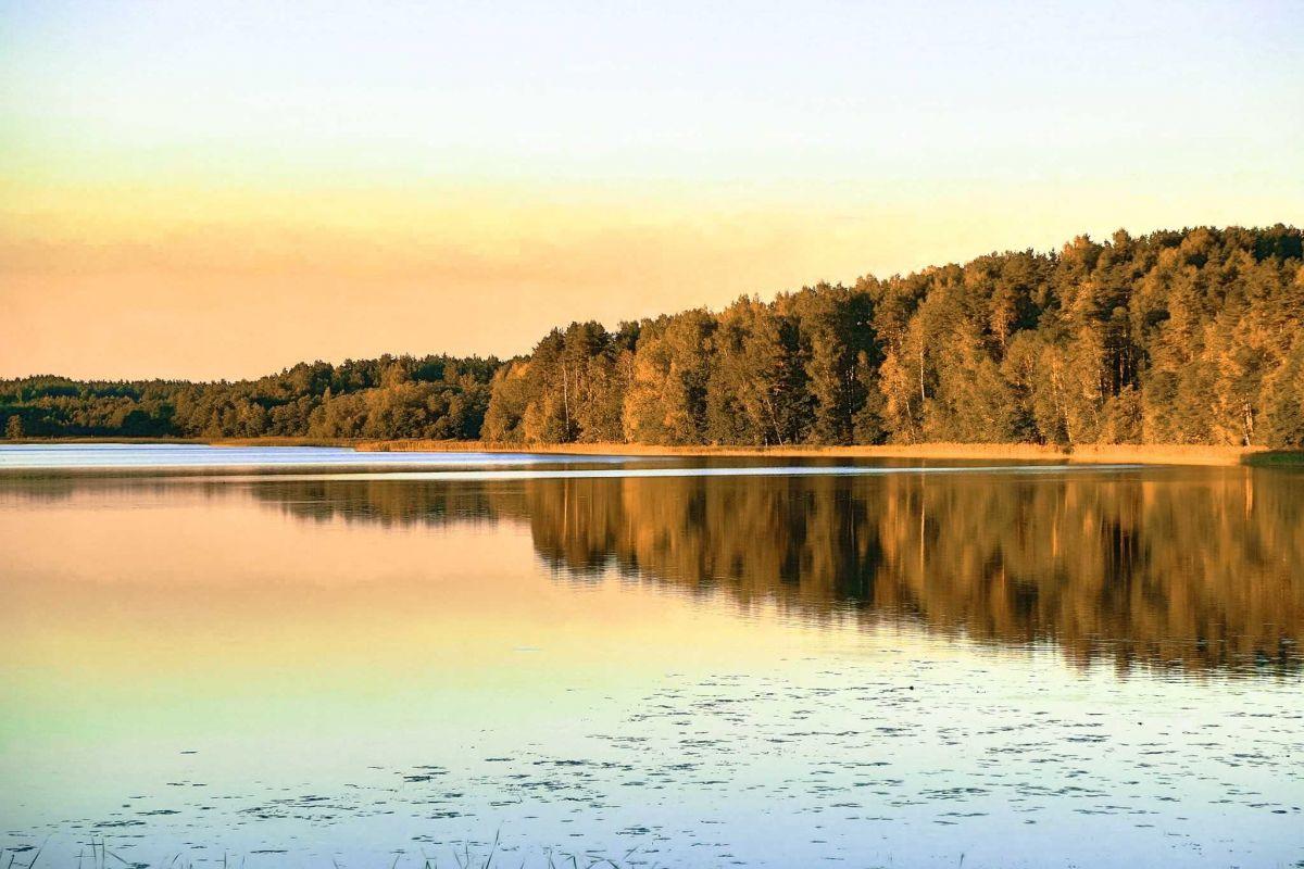 Россия лес на берегу леса
