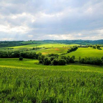 Тоскана, Италия, зелень природы