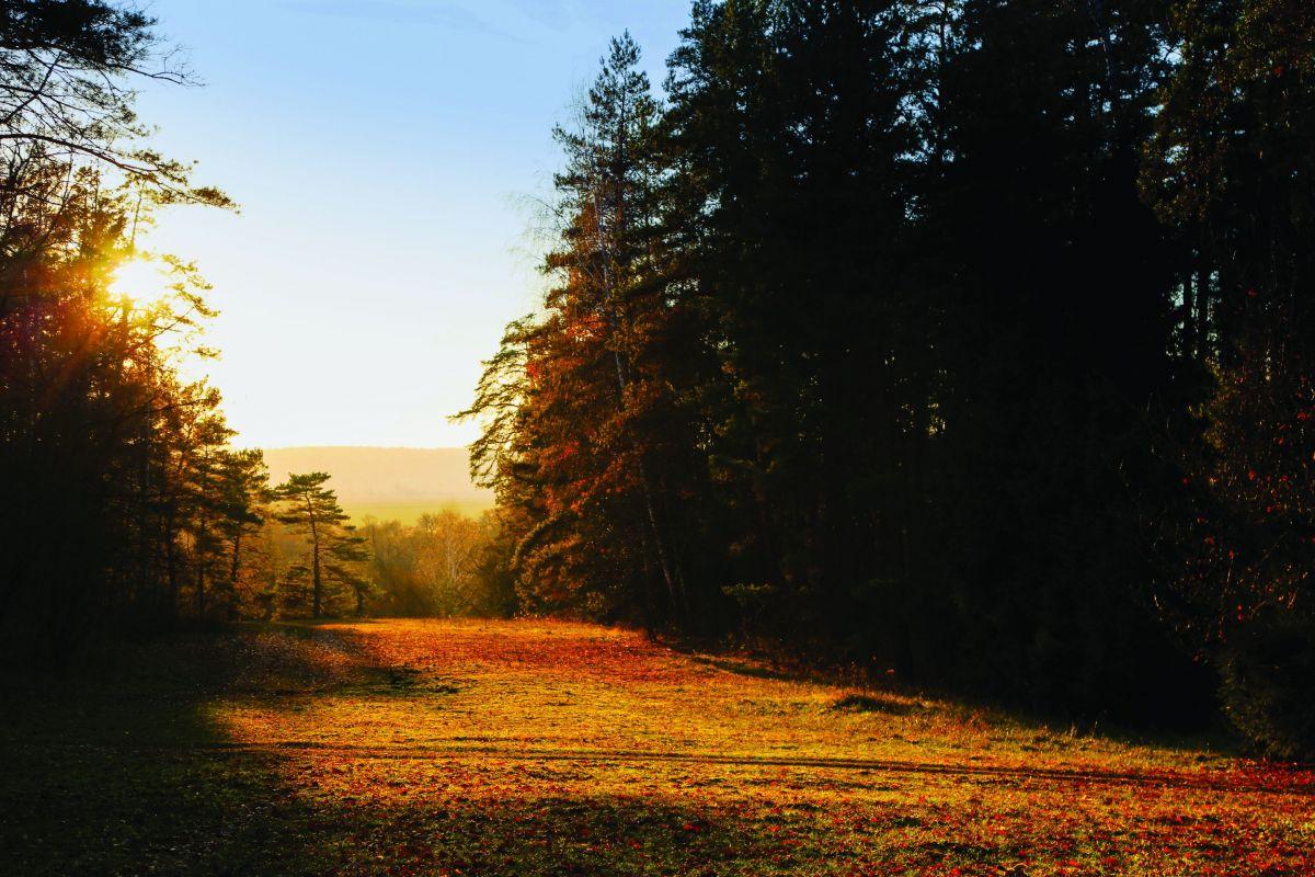 Осень в Полёново, Россия