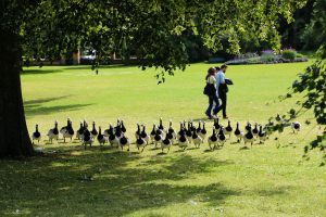 Птички в парке в Швеции