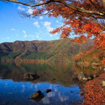 озеро и деревья осенью в японии