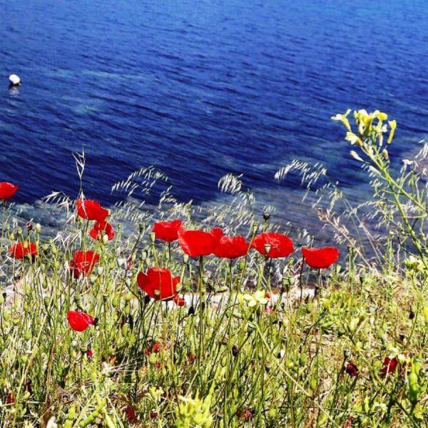 Цветы Сан-Тропе, Франция