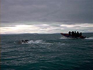 Рассказ праздник кита, Елена Павличенко