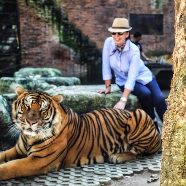 Животные, Тайланд