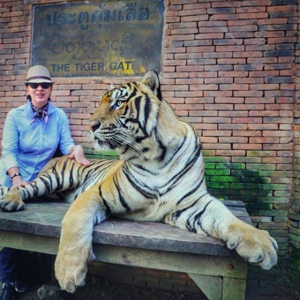 Тигр, тайланд