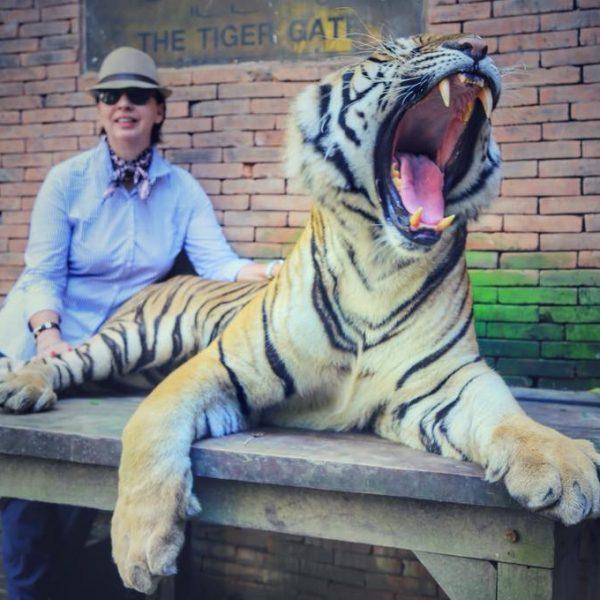 тигры в зоопарке тайланда