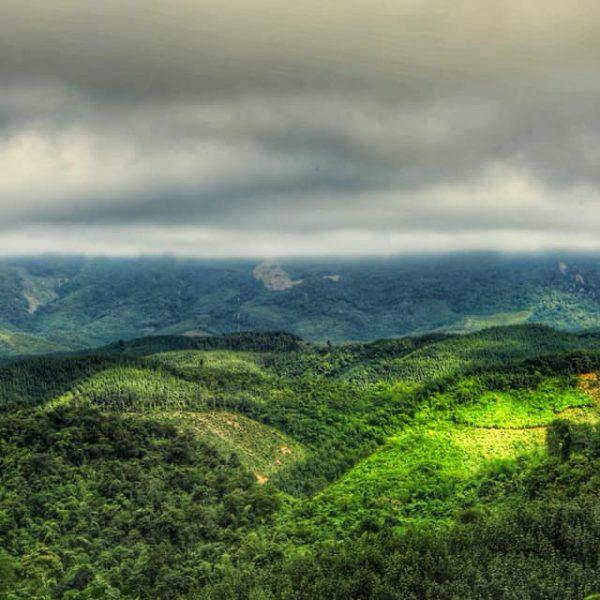 Зелёный Тайланд