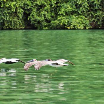 озеро, гватемала