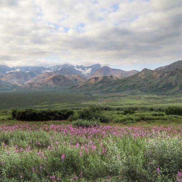 Аляска, парк Делали
