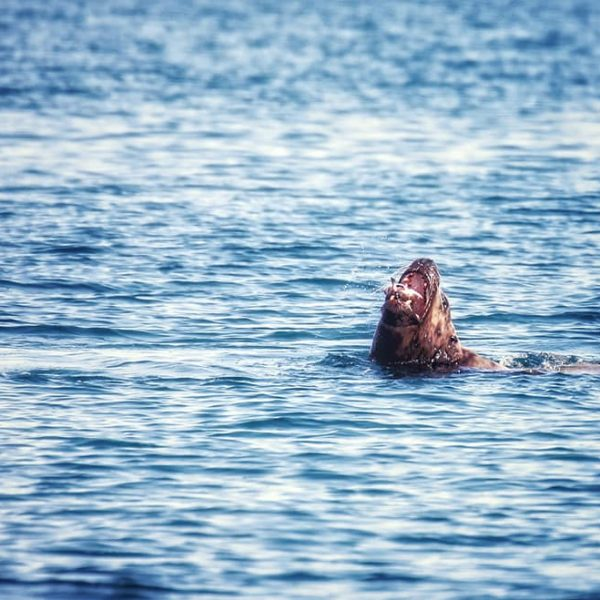 Тюлень в деле