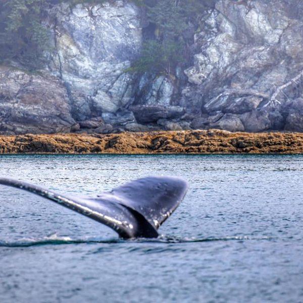 Плавник кита