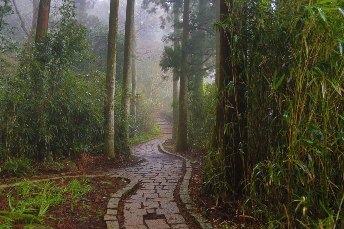 Путешествие по Японии весной.  Лес в Хаконе