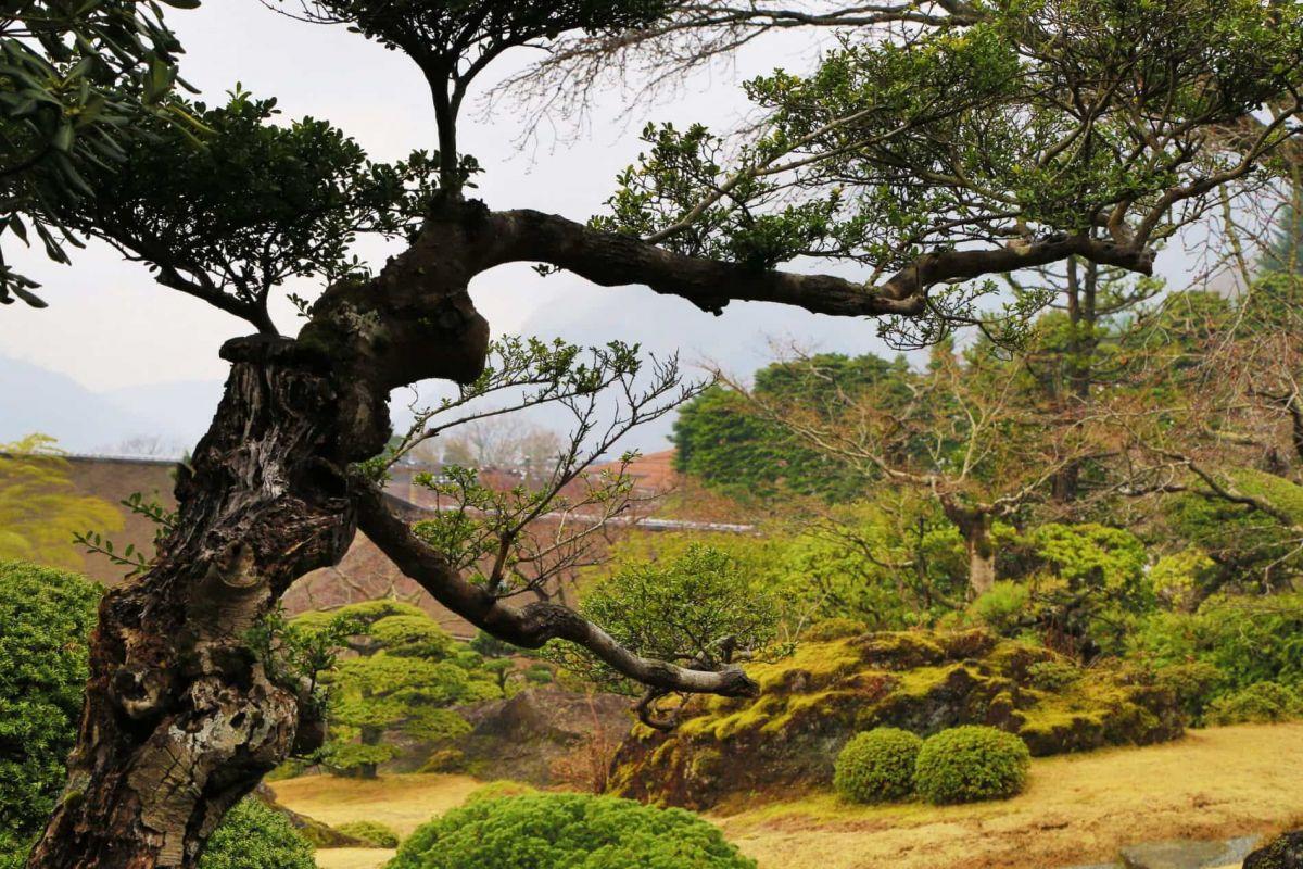 Путешествие по Японии весной.  Парк в Хаконе