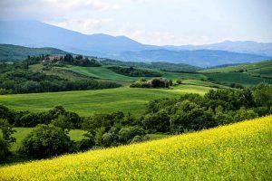 Тоскана цветочные луга