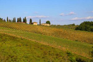 Тоскана поля