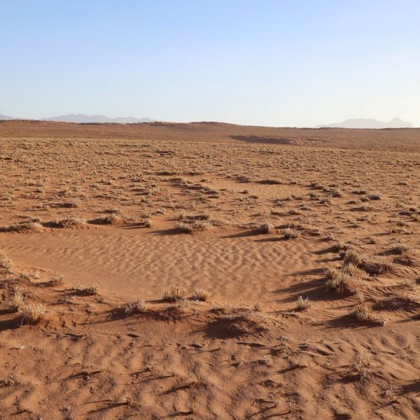 Круги в пустыни в Намибии