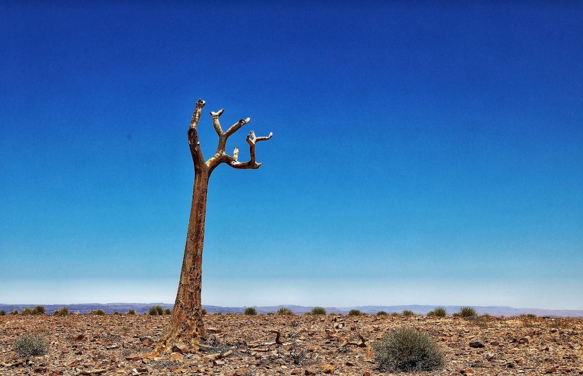 Лес колчанных деревьев, Намибия